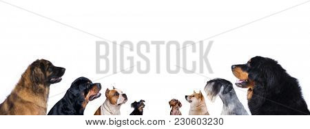 group of dogs is looking up, portrait in profile