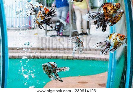 Goldfish Swim In An Aquarium On Guangzhou Street
