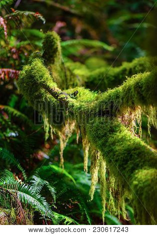 Branches Of Trees In The Subtropical Forest, Covered With Moss, Fern Bushes With Long Leaves, The Ba