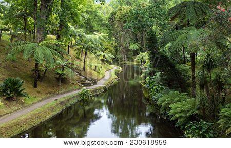Terra Nostra park, Sao Miguel Iskand, Azores