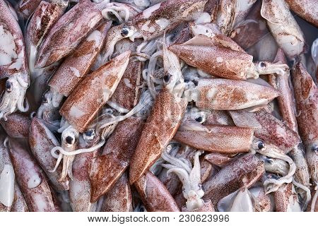 Small Red Wet Squids Are Lying On Each Other. Closeup Horizontal Photo.