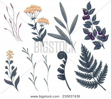 Field Flowers, Wild Plants And Herbs. Fern, Blueberry, Tree Branches And Foliage. Night And Dark Gre