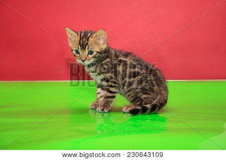 Cute Bengal Kitten Is Sittiing On A Green Mirror Flooring. Pet Animals.
