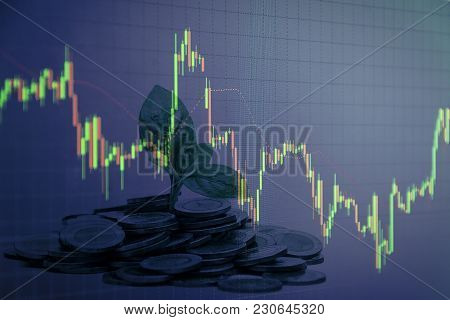Seedlings Growing From The Coin Stacks Candlestick Graph Background , Business And Financial Concept