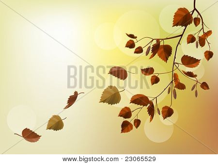 Branch with autumn leaves