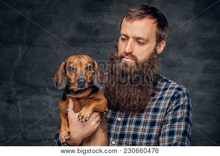 Studio Portrait Of Cute Brown Badger Dog And His Bearded Man Friend.
