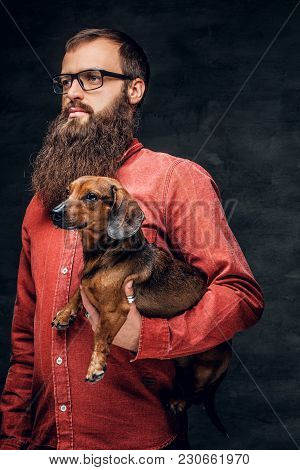 Portrait Of Bearded Male In A Red Shirt Holds A Brown Badger Dog.