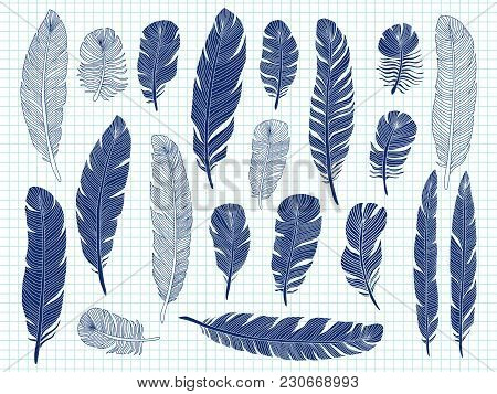 Ballpoint Pen Drawing Bird Feathers Big Set On Notebook Background. Bird Feather Drawing Sketch, Plu