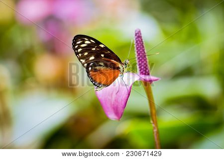 Butterfly On The Flower With Green Leaves Background.  Butterflies Are Very Active During The Day An