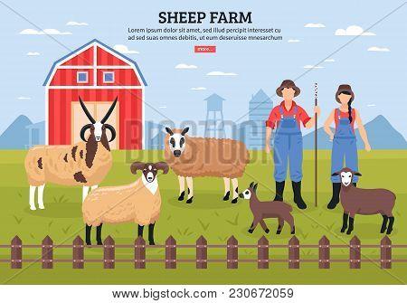 Sheep Breeding Husbandry With Barn And Farmers Couple Among  Grazing Lambs Ewe Ram Flat Poster Vecto