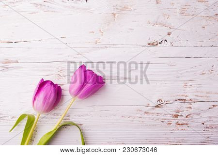 Violet Flower On A White Wooden Background. Studio Shot. Copy Space. Easter And Spring Flat Lay.