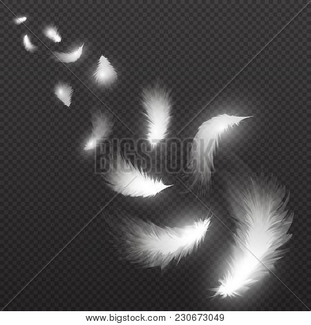 Flying Light Swan Feathers Plume On Black Background Vector Illustration. White Feather Falling, Fly