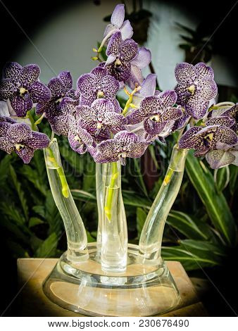 Charming Purple Flowers Arrangement In Crystal Vase With Green Leaves. This Antique Crystal Vase Mak