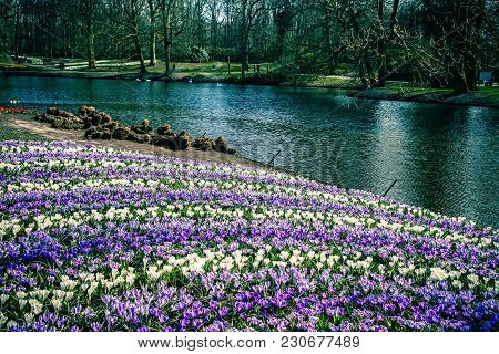 Great View Of River Bank With Vibrant Purple And White Flowers And Trees. The Blooming Flowers In A