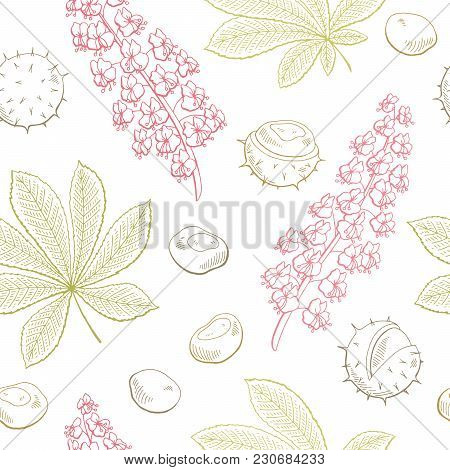 Chestnut Flower Leaf Graphic Color Seamless Pattern Sketch Illustration Vector
