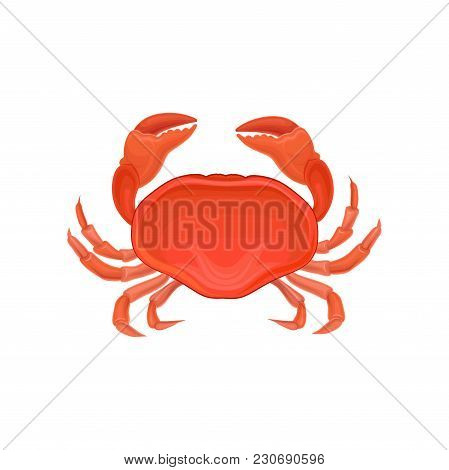 Detailed Illustration Of Red Crab. Marine Creature With Big Claws. Sea Animal. Decorative Element Fo