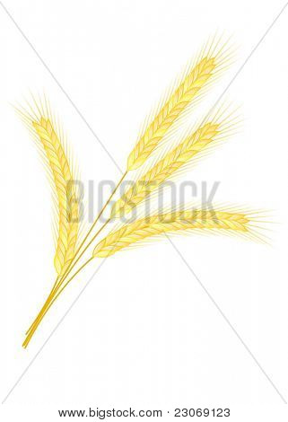 Isolated golden wheat ear after the harvest. Raster version. Vector version is in my gallery.