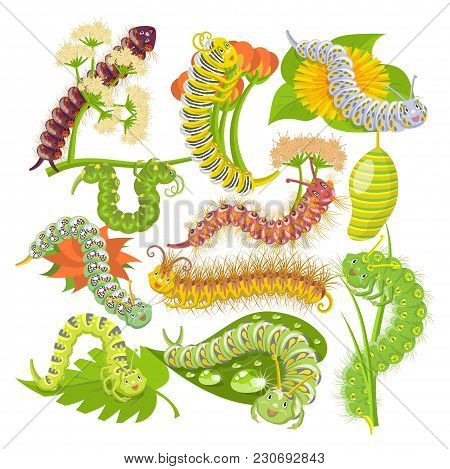 Caterpillar Vector Leafworm Or Green Larva And Leafy Worms In Nature Illustration Set Of Spanworm An