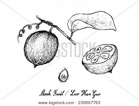 Tropical Fruits, Illustration Of Hand Drawn Sketch Monk Fruit, Luo Han Guo Or Siraitia Grosvenorii I