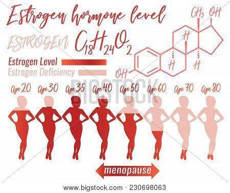 Estrogen Hormone Level Infographic. Beautiful Medical Vector Illustration With Oestrogen Molecular F
