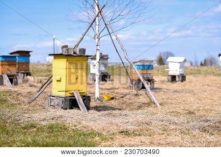 Bee Ulii Standing In Field In Summer