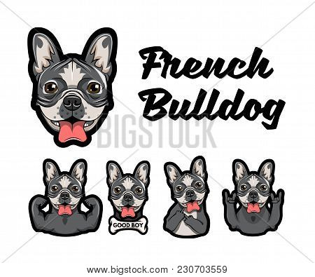 French Bulldog With Different Gestures. Dog With Muscules, Bone, Middle Finger, Horns And Rock Gestu