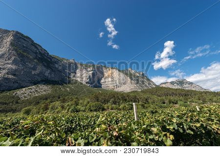 Rock Faces And Vineyards In The Mountains Of The Sarca Valley (valle Del Sarca) In Trentino Alto Adi