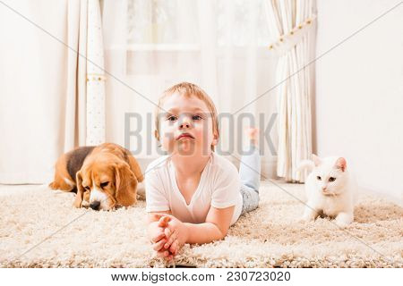 Cat And Dog Are Lying On The Carpet Near The Boy