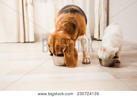 The Cat And Beagle Are Eating Together From The Bowls.