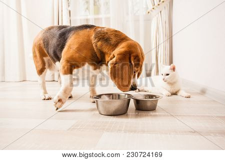 The Dog Wants To Try Cats Meal While The Cat Is Relaxing On The Floor