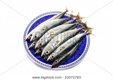 Close detail view of a dish filled with Atlantic mackerel fish isolated on a white background. poster