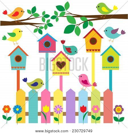 Collection Of Colorful Birds And Birdhouses.vector Illustration,vector Card