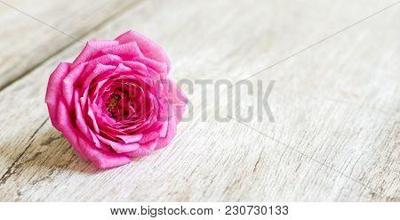 Spring Forward, Springtime Concept - Pink Rose Flower, Web Banner And Greeting Card Background