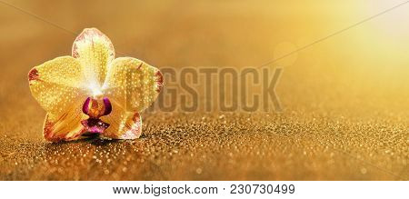 Web Banner Or Greeting Card Idea Of A Golden Yellow Orchid Flower With Blank, Copy Space