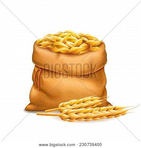 Vector Realistic Bag With Unrefined Wheat Grains, Barley With Wheat Ears Isolated On White Backgroun
