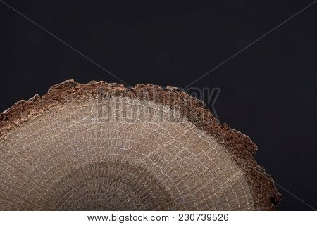 Piece Of Cut Wood Log Texture As Background
