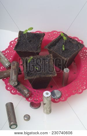 Young Green Shoots Of Sprouts In Peat Containers. They Are Surrounded By Worn Out Batteries, Coated
