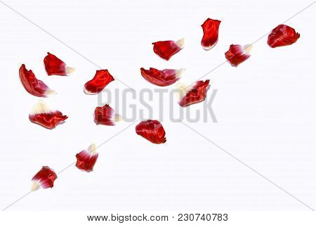 Floral Background Of Petals Of Spring Tulip Flowers