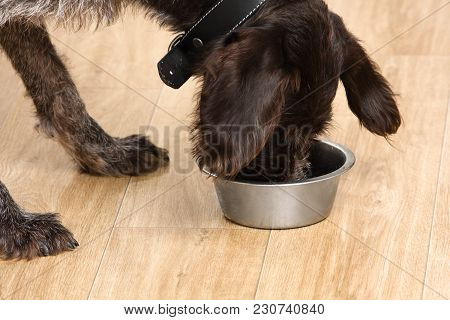 Dog Eating Food From A Bowl On The Floor