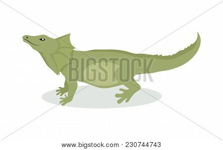Lizard Cartoon Character. Green Lizard Flat Vector Isolated On White. South America Fauna. Lizard Ic