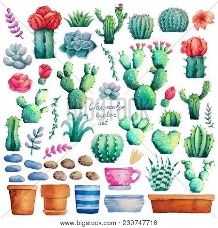 Set of watercolor painted cactus collection