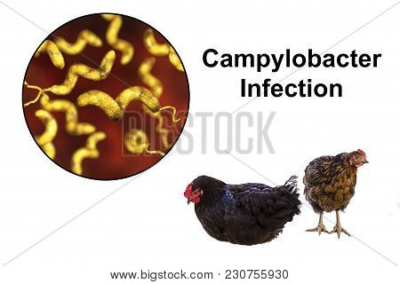 Chicken Meat As The Source Of Campylobacter Infection, Medical Concept. 3d Illustration Showing Chic