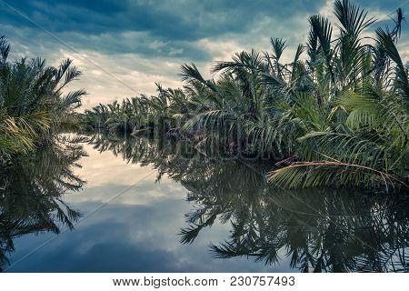 Scenic Lagoon At Sunset Near Tangalle, Sri Lanka. Amazing View Of The Lagoon In Rainforest. Mysterio