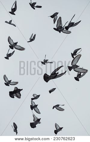 Photo Of Masses Pigeons Birds Flying In The Sky