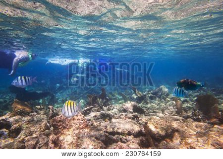 Snorkeling with fishes in the Caribbean Sea of Mexico