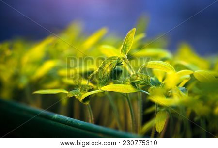 Growing Sprout - Beginning Of A New Life (plant, growing, sunlight)