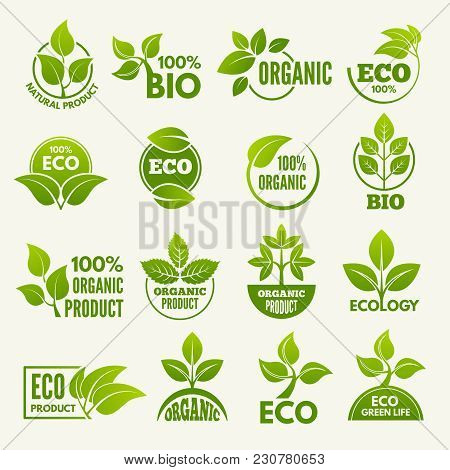 Logos Of Eco Style. Business Concepts To Protect Nature. Eco And Green Organic Label. Vector Illustr