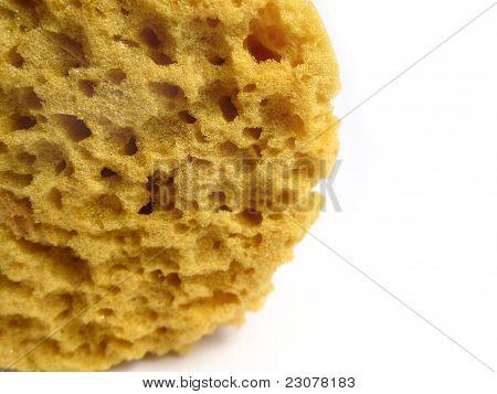 A natural wild sponge