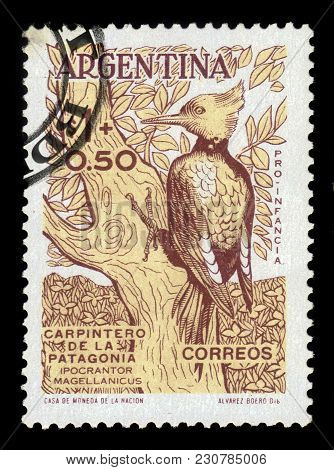 Argentina - Circa 1960: A Stamp Printed In The Argentina Shows Magellanic Woodpecker (campephilus Ma