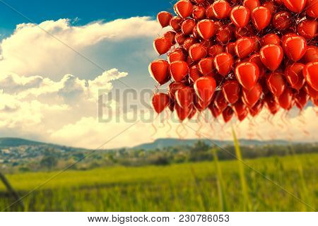 Dreamscape Outdoor And Balloons.colorful Balloons Flying Over Blue Sky.